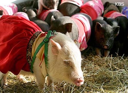 Rund um die Tiere des Östlichen Zodiak: Schwein 2