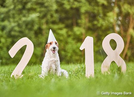 عام مستطاب يا كلاب: