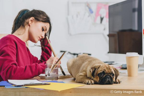عدد من الشركات الكورية ترحب باصطحاب موظيفها لحيواناتهم الأليفة إلى العمل