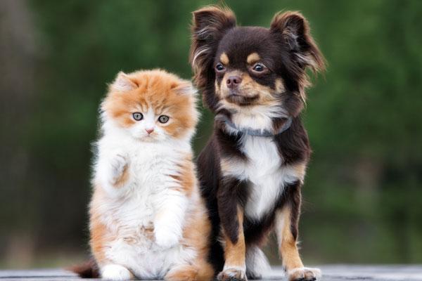 زيادة التقنيات الخاصة برعاية الحيوانات الأليفة أثناء عند غياب أصحابها