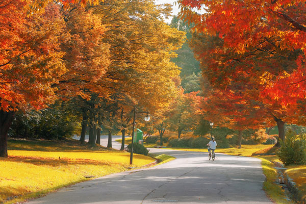 كوريا تشهد موسم المهرجانات مع حلول فصل الخريف