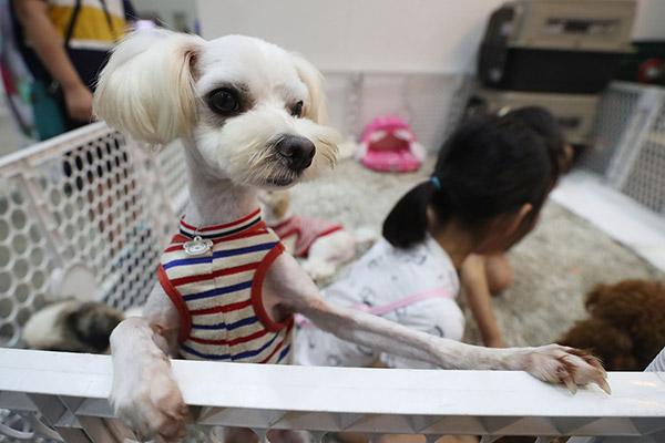 وزارة الزراعة الكورية تقترح فرض ضريبة على تربية الحيوانات المنزلية