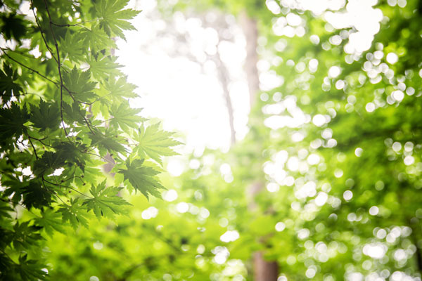 ازدياد قيمة المصلحة العامة للغابات للمواطن الكوري