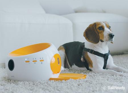 BallReady, une startup de jouets « intelligents » pour animaux de compagnie