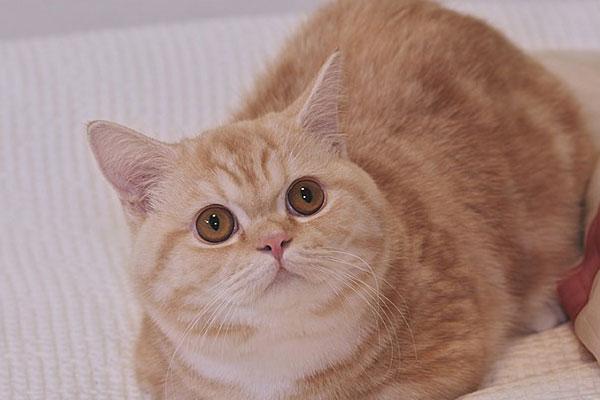 《只有我没有猫》(나만 없어 고양이)