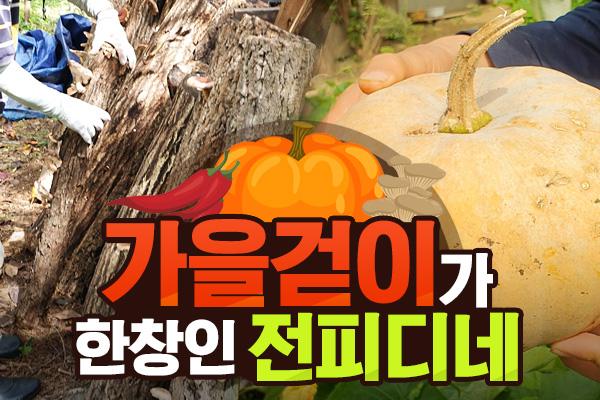 가을걷이가 한창인 전피디네