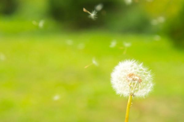 预防和应对花粉过敏