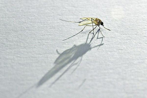 吃哪些食物容易招蚊子