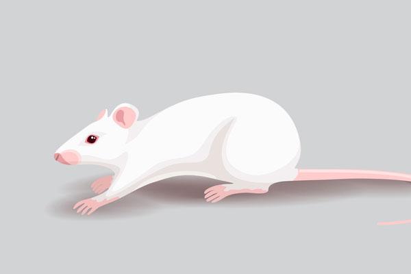 الفأر آكلُ الأظافر