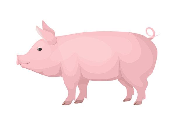 أنف الخنزير القصير