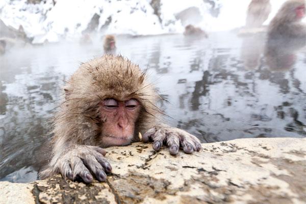 القرد والماء المداوي