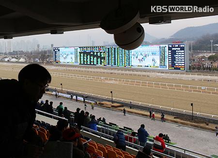 Balap Kuda di Seoul Race Park