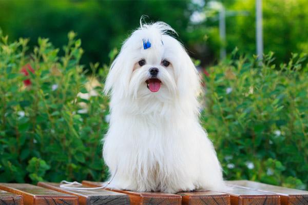 Сближаясь с Севером: Домашние животные в КНДР