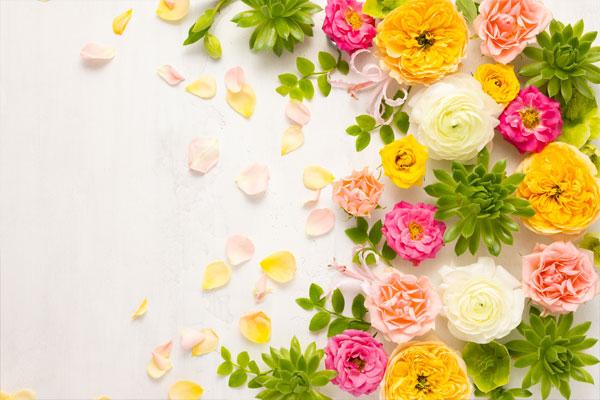 Цветы в КНДР