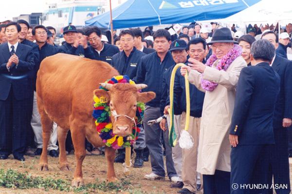1998年现代集团名誉会长郑周永赶着牛群访问北韩
