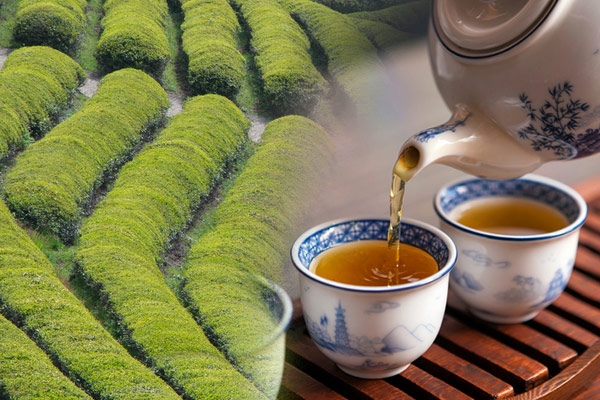 Зеленый чай нокчха (녹차)
