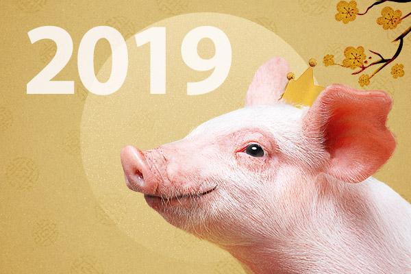 Neujahr: Das Jahr des Schweins
