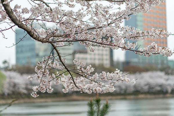 Danau Seokchon