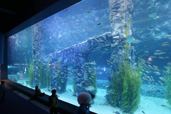 Les plus beaux aquariums, zoos et jardins botaniques de Corée