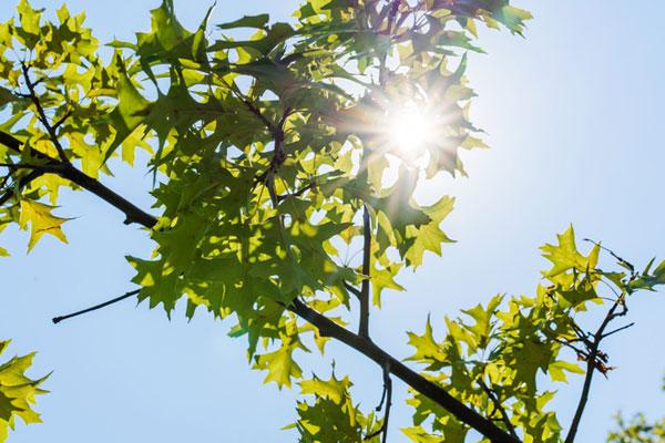 Sambok, les trois jours les plus chauds de l'été