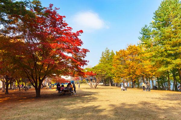 Les plus belles chansons d'automne