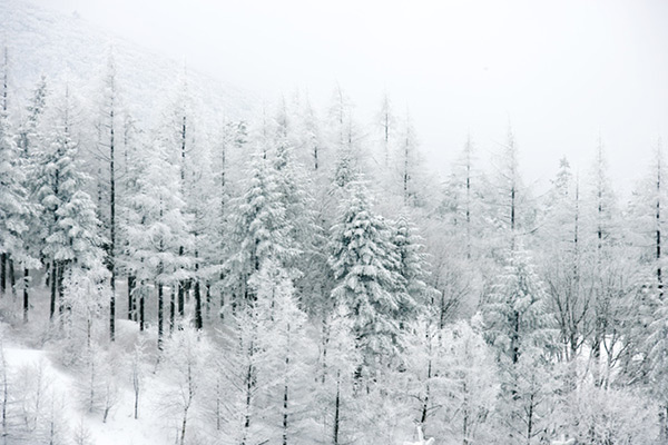 Les plus belles chansons d'hiver
