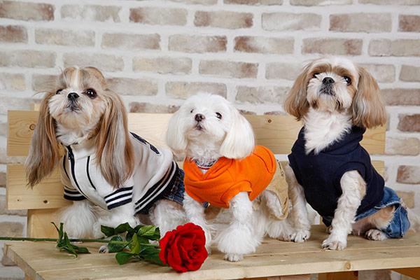En Corée du Sud, les chiens vont à la maternelle