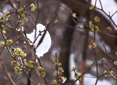Namul de printemps (II)