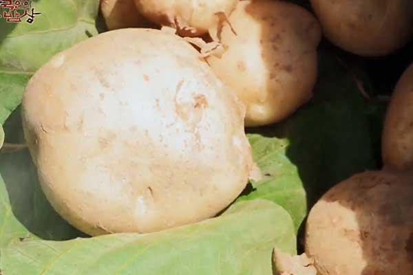 Pomme de terre d'été (II)
