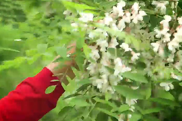 Fleurs dans la bouche (II)