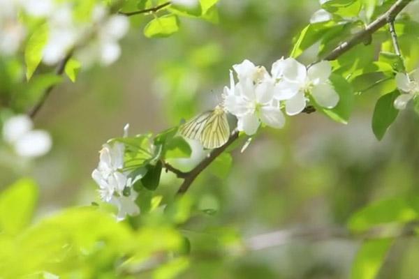 Plats de fleurs (II)