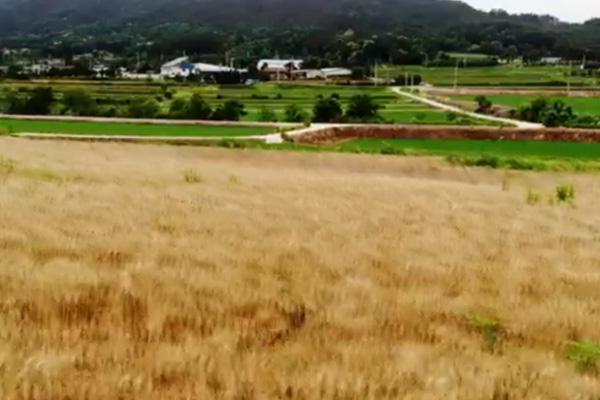 Souvenirs liés à la farine de blé (II)