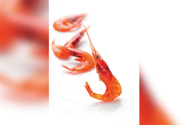 Креветки: вкусный дар осеннего моря. Ч.1