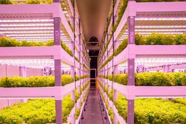 شركة كورية تبنى مزرعة عمودية ذكية في الكويت