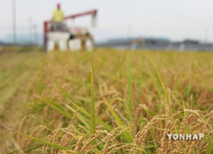 Минсельхоз США понизил прогноз урожая риса в СК
