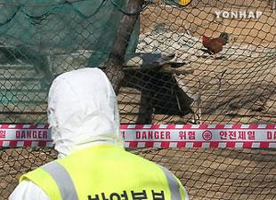 إيقاف جزئي لإنتاج البط في مقاطعة شمال تشونغ تشُنغ