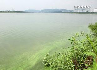 Ordenan abrir 6 represas para controlar la proliferación de algas