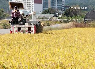 Disminuye tasa de autoabastecimiento de arroz