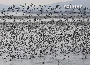 В РК подтверждён второй случай птичьего гриппа среди домашней птицы