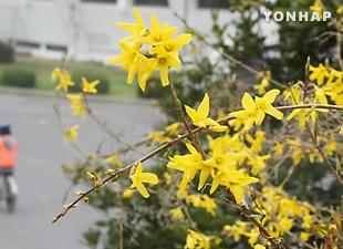 春の開花 平年より1~4日早まる