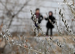Perbedaan suhu udara harian musim semi di Seoul berkurang selama 40 tahun terakhir