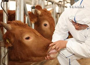 한국 원조로 베트남 가축질병 연구시설 완공