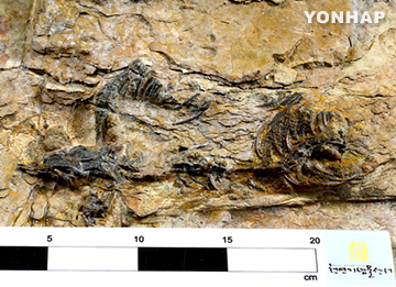 Well Preserved Fossil of Theropod Dinosaur Found in Hadong