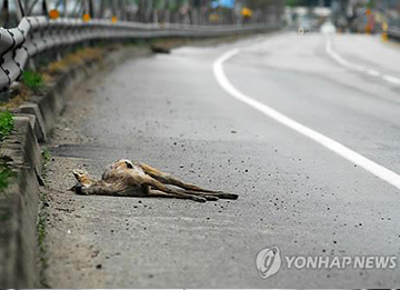 Roadkill Concentrated in May, June
