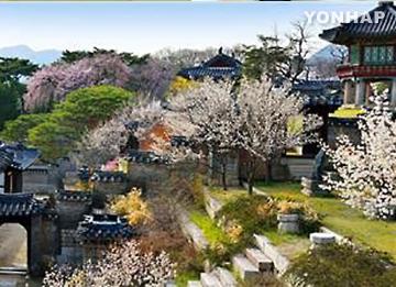 今年韩国春花开放时间将比往年提前1至4天