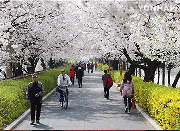 桜開花 平年よりやや早めに