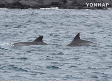 Дельфины из зоопарка в Seoul Grand Park будут выпущены в море