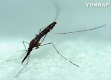 No. of Malaria Patients in S. Korea Increasing