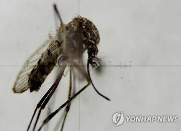 AS Menyetujui Uji Klinik Vaksin Virus Zika Terhadap Manusia