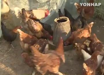 В РК подтверждён 101 очаг птичьего гриппа
